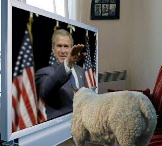 bush sheep tv